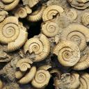 Fossiileja
