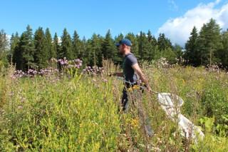 Kukkaniityt ovat hyviä kohteita perhosten tarkkailuun. Kuva: Tähtitalvikki Poikajärvi